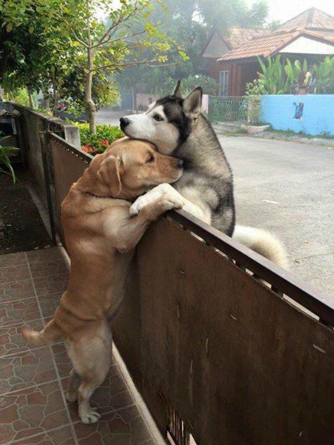 chiens câlin