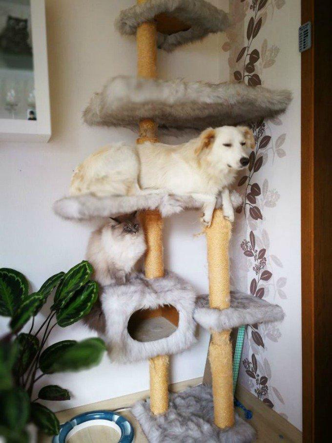 chien arbre à chat