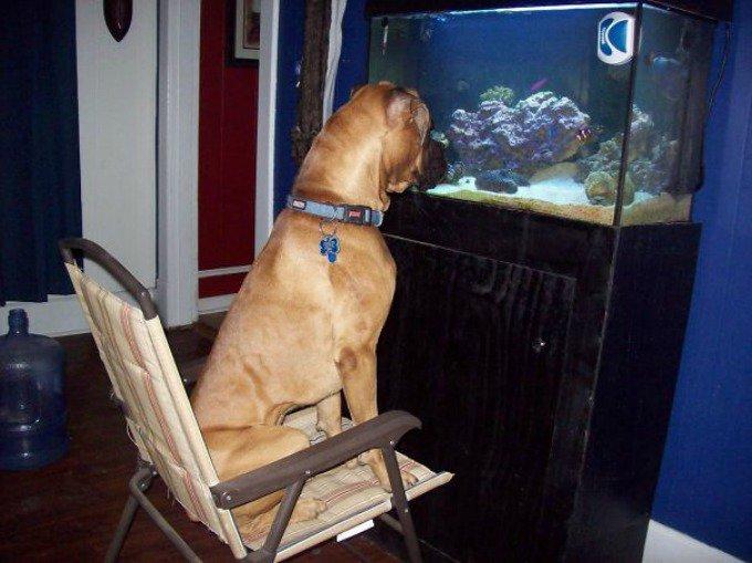 chien aquarium