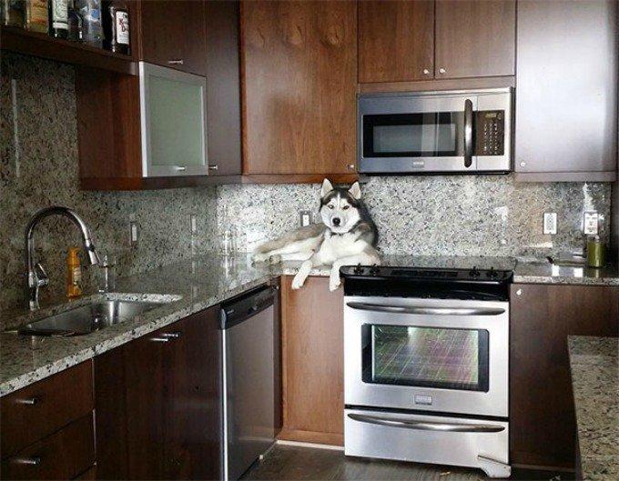 husky cuisine