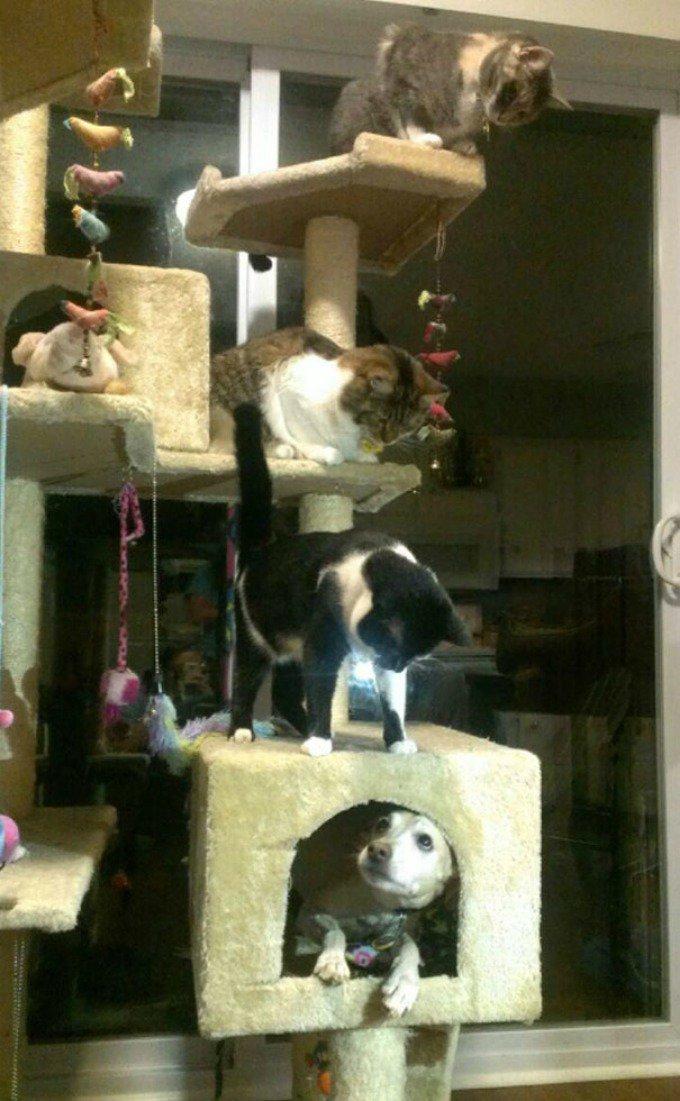 arbre à chats chien