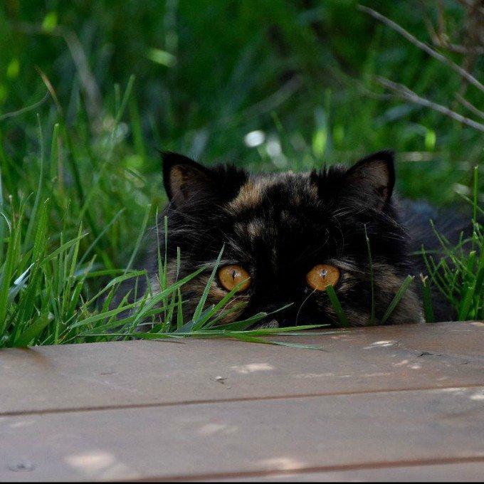 chat noir herbe