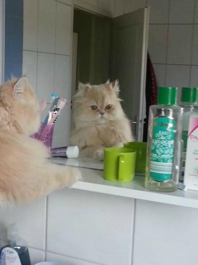 chat salle de bain