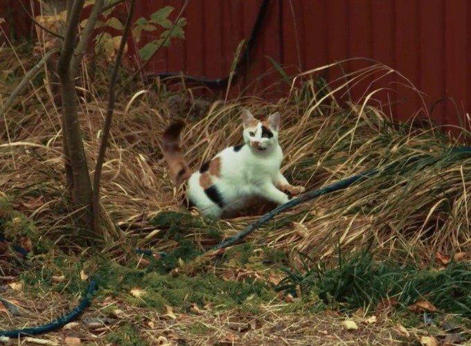 chatte vole la vedette