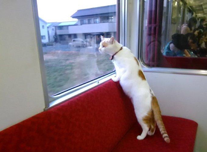 chats au japon