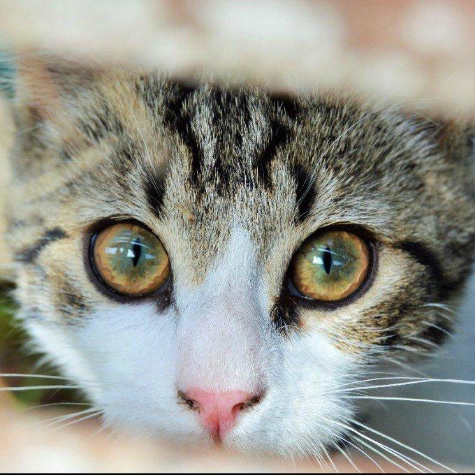 jules chat regard