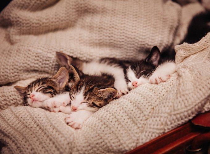 kitten-sleeping-habits-need-to-know
