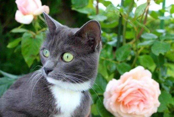 chat lune fleur