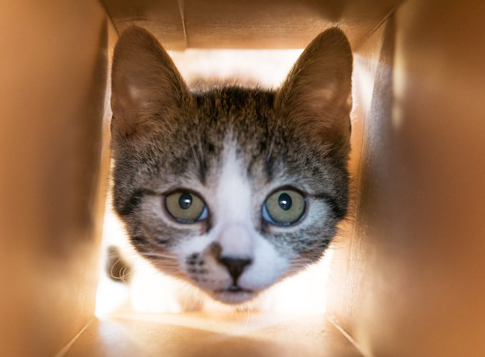 7-weird-things-your-cat-does-and-why