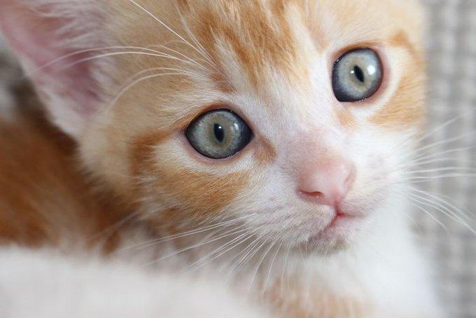 Eliot-cat