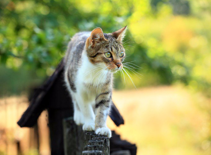cat-walking-on-fence
