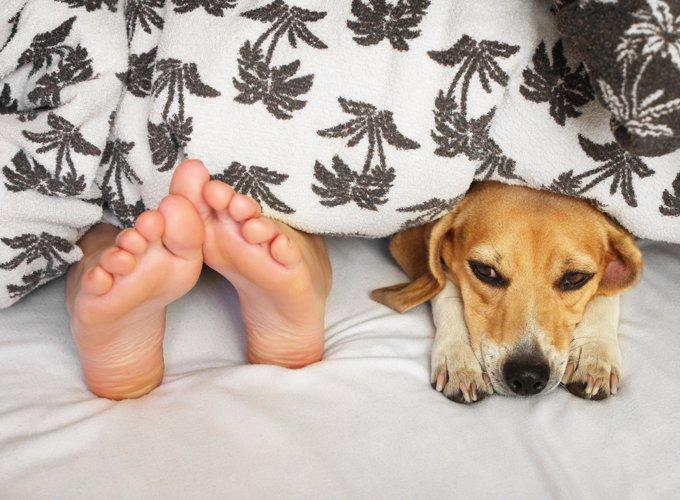 Mon chien adore me lécher les pieds, mais pourquoi ?