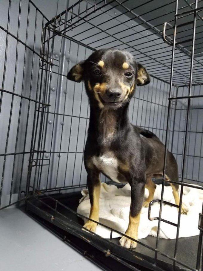 chien sourire refuge