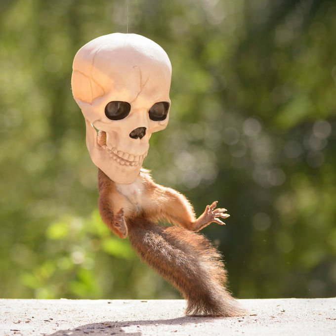 ecureuil squelette halloween
