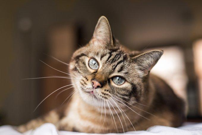 au sujet des chats