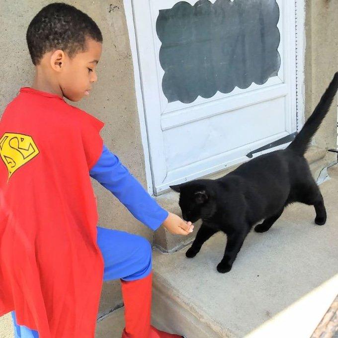 shon et les chats