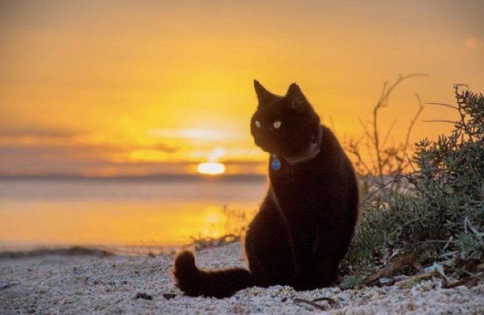 chat qui voyage