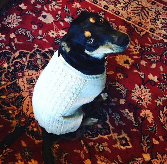 dog-ill-kennady-pretend