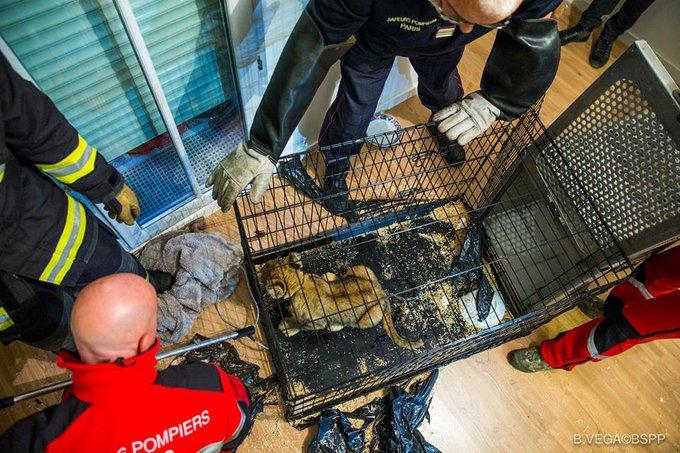 lion-cage-paris