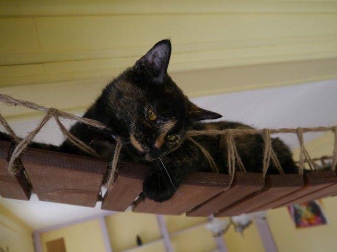 chatte écailles de tortue