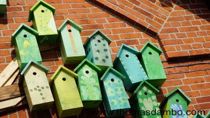 cabanes à oiseaux