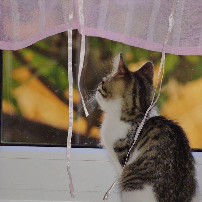 chat regarde à travers la fenêtre.