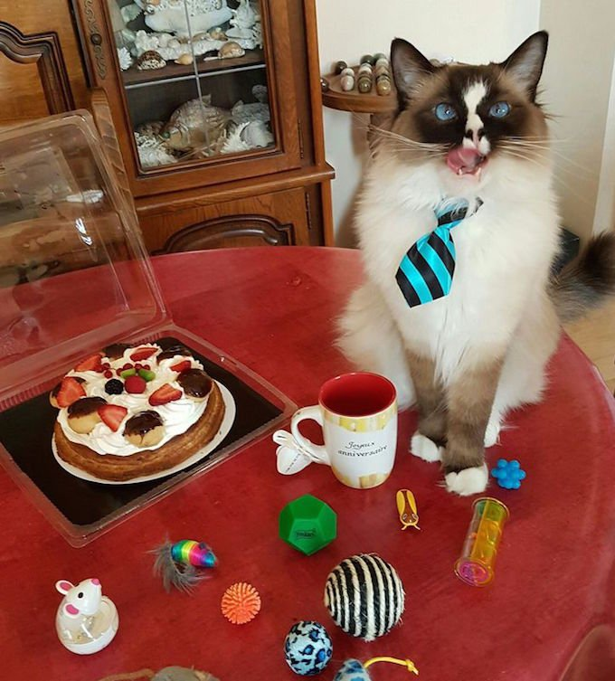 Laban fête son anniversaire sur Yummypets.