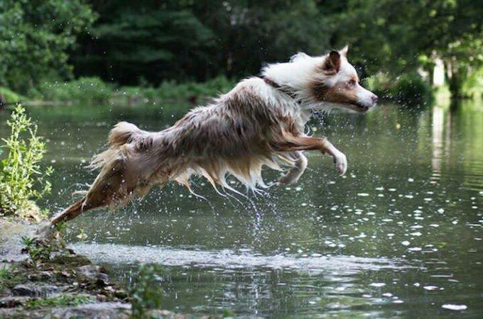 """Jewel, gagnant du concours photo Yummypets """"Mon animal adore l'eau""""."""