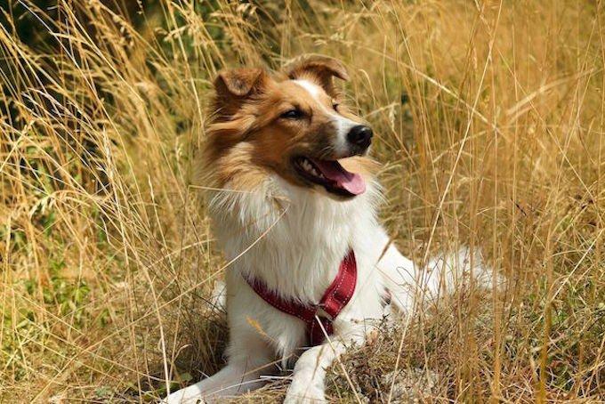 """Lumos, gagnant du concours photo Yummypets """"Mon animal en été'"""