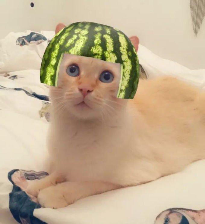 Les chats testent les filtres Snapchat.
