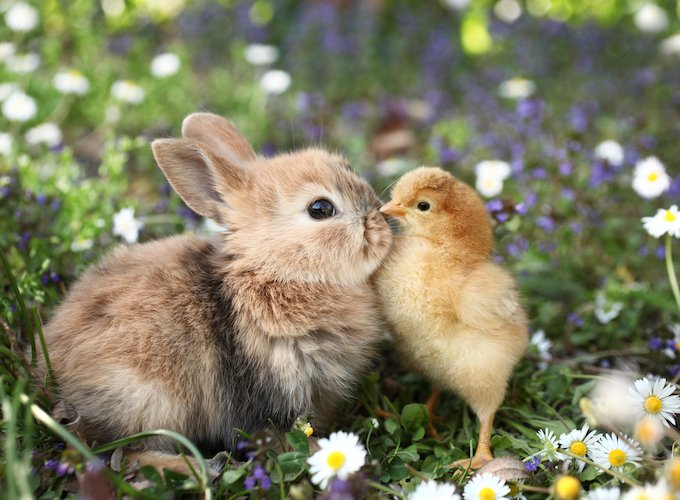 Puppies And Bunnies Can Help Relationships Last Longer Yummypets