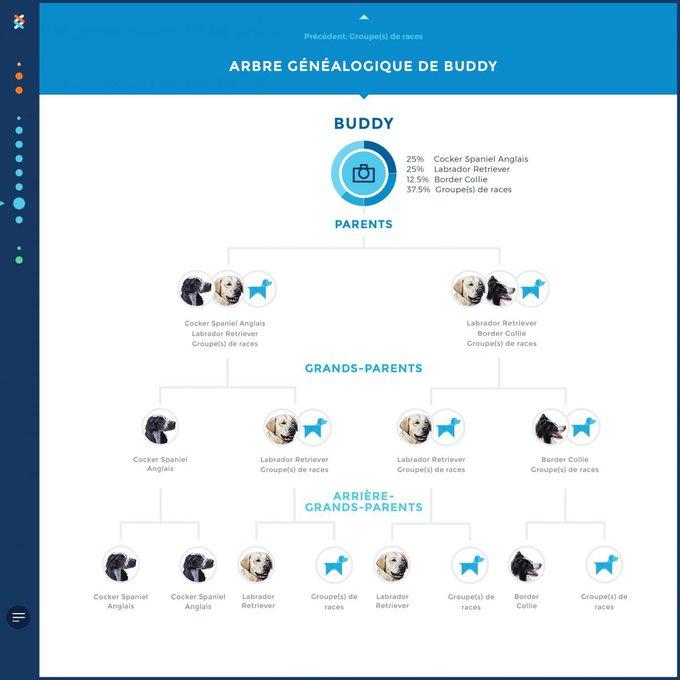 Wisdom Panel : Connaître la généalogie de votre chien.