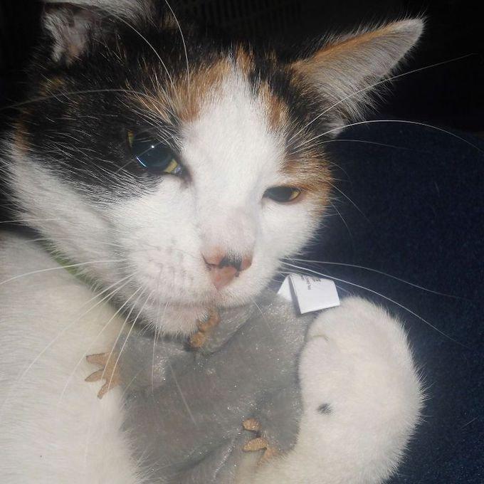Cat's family a gagné au concours photo Yummypets du mois de novembre.