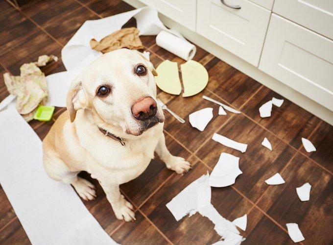 你是个标准的宠物控吗?| 中了3条以上就乖乖认了吧!