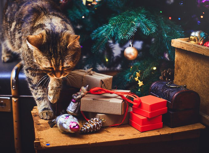 Why Some Cats Don T Like Christmas Yummypets