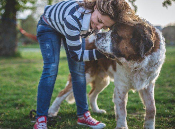 Le Saint-Bernard fait partie des races de chiens les plus sociables.