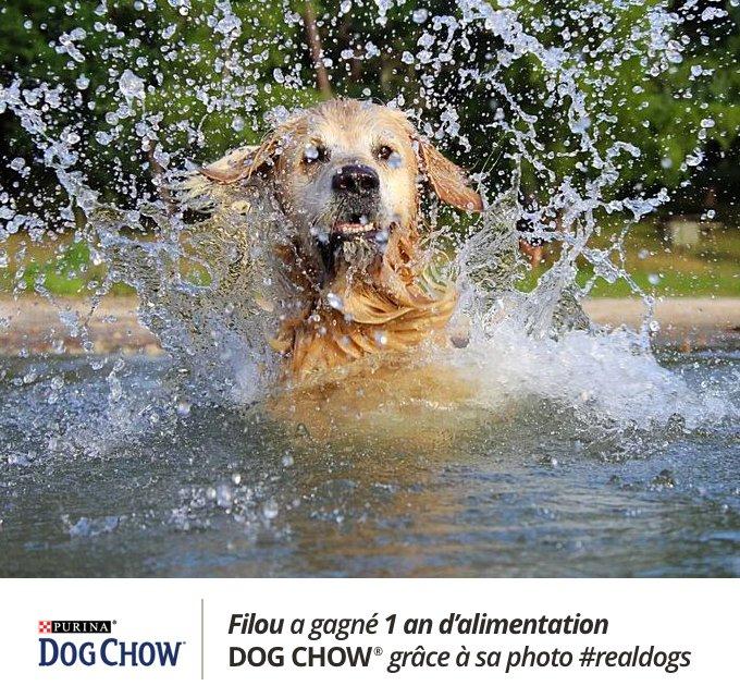 Filou a remporté le concours #realdogs avec Dog Chow® x Yummypets.