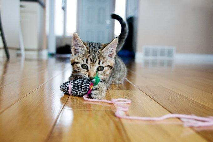 idées pour jouer avec son chat