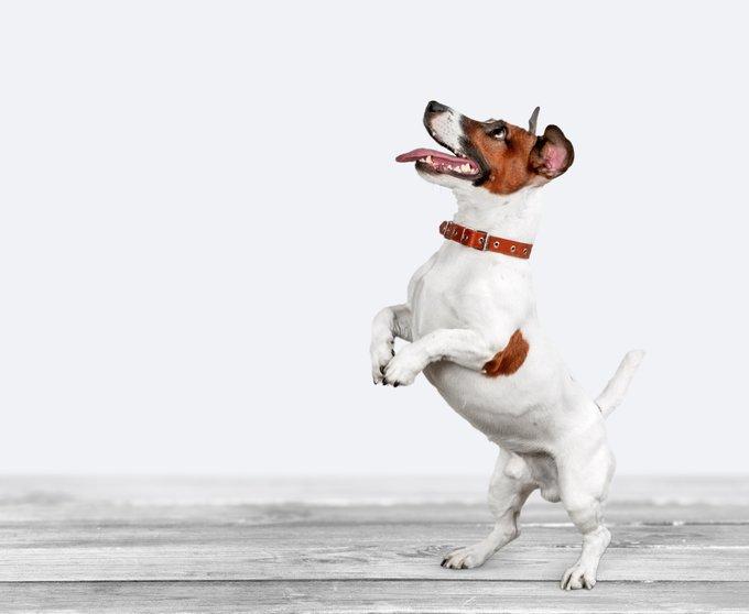 petit chien vif
