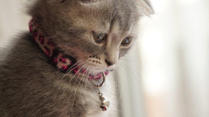 chaton semble triste