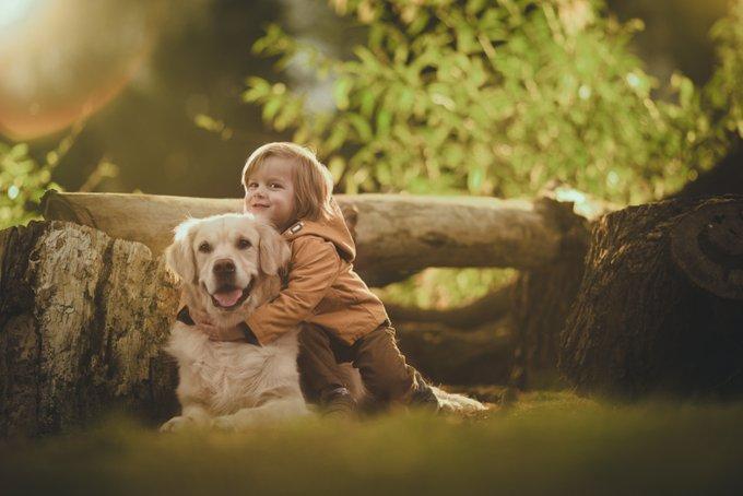 chiens plus sociables
