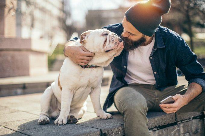 chiens les plus sociables