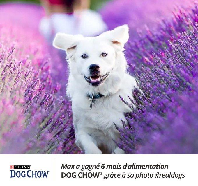 Max a remporté le concours #realdogs avec Dog Chow® x Yummypets.