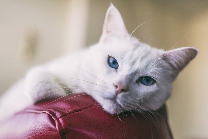 chat a des vers
