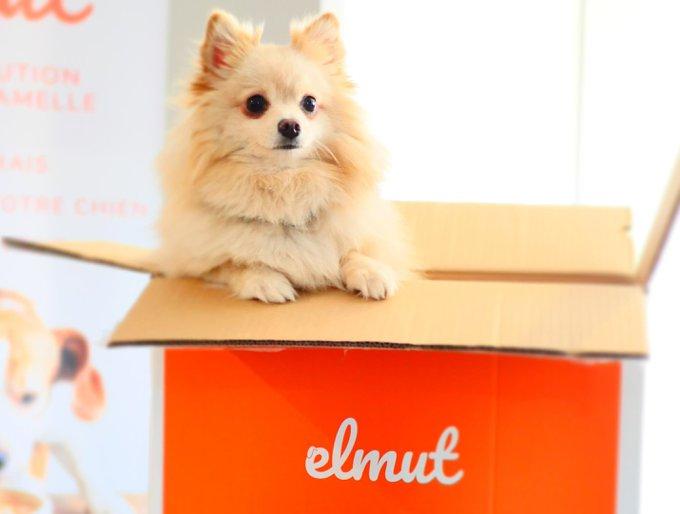 elmut plats frais pour chiens