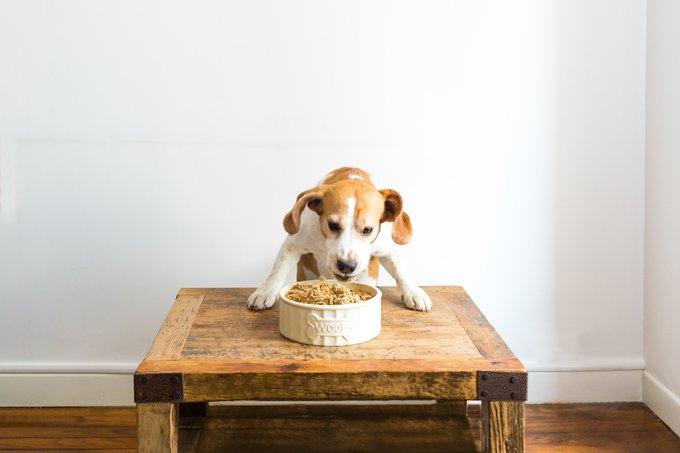 alimentation fraîche pour chiens