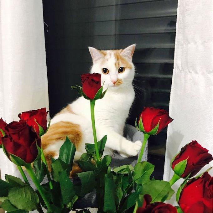Sassy a remporté le concours photo Yummypets