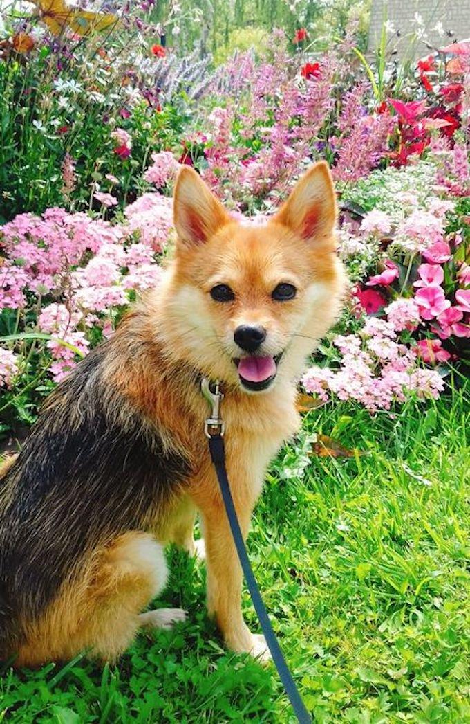 Roxy a remporté le concours photo Yummypets.