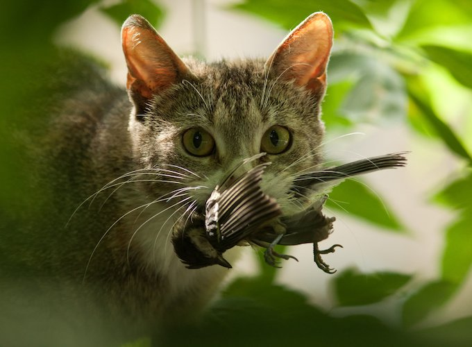 Australia-controversial-plan-kill-feral-cats-save-threatened-wildlife-species-2019.jpg