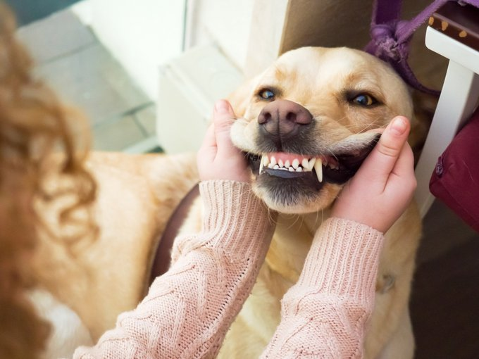 détartrage des dents du chien